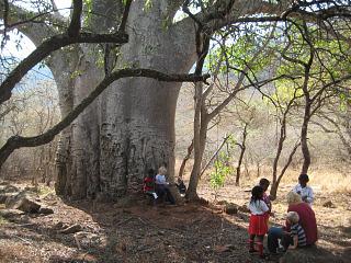 Met de lokale kids zijn we aangekomen bij de grote baobab