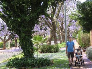 Onder de paarse jacaranda bomen van Pretoria